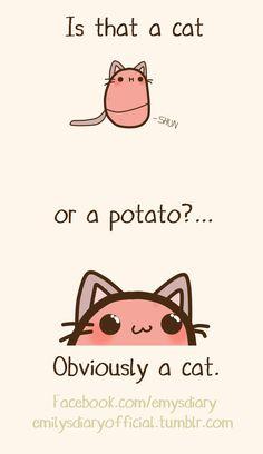 Obviously catato