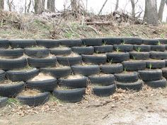 More tire retaining wall.