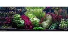 FARHAD TARAJ For info about this aquascape and to give it a rating click the link in our profile!