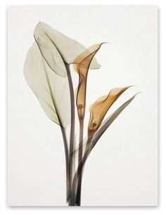 W005 Calla Lily Unframed Art Wall Canvas Prints for Home Decorations - 30CM X 40CM