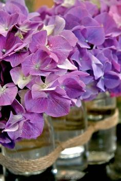 can't get enough of hydrangeas