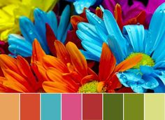 Modern interior colors, orange color schemes: Pink, blue and green color with rich orange color shades