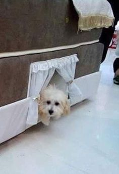 Brazilian company Colchão Inteligente Postural recently designed a pet bed that fits right into a customized mattress spring