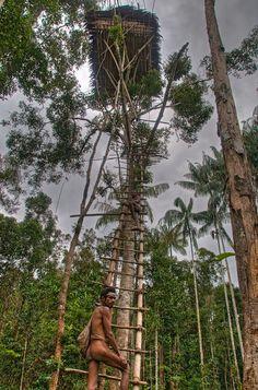 Korowai tribe tree house, Papua, Indonesia