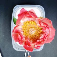 Learn how to transform fresh flowers into forever resin keepsakes.