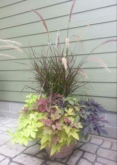 My sweet potato vine patio plant