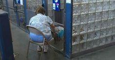 Donna legge in canile perché i cani non si sentano soli