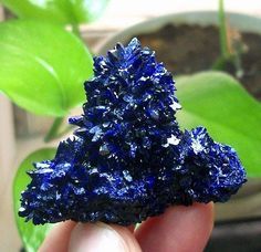 New-Sharp-Gemmy-Royal-Blue-Azurite-Crystal-Mineral-Specimen-Sepon-Mine-Laos-852