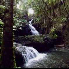 Hawaii rain forest