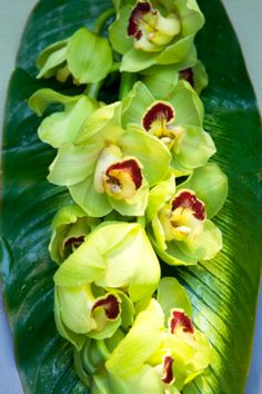 Title:  Orchids on tropical green leaf  Photographer:  Tooga