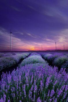 With the scent of lavender by AlbenaMarkova