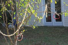 Decorate a tree for the birds and squirrels with popcorn and cranberry wreaths.