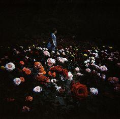#Fotodeldia: sin título, de Ki-Dae Moon.  photooftheday #spring #flowers