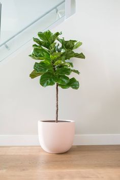 Many people are interested in getting facts about Bring a Plant Cutting Indoors. We can help you. Just click our link to find out more.