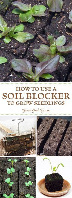 One of the benefits of using soil blocks to grow seedlings is it eliminates the need for plastic cell packs or peat pots. The soil block functions as both the container and the soil for starting and growing seedlings.: