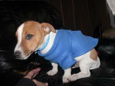My family members moved into their new home last night on Hudson road, Blackpool (FY1 6LY) and just noticed their Jack Russel Terrier is not in the house. They think he may have got out early when someone left for work. Please look out for him. Junior Powell, small smooth haired. Chipped, collar on withRead More
