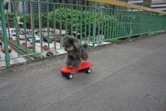 Skate pood