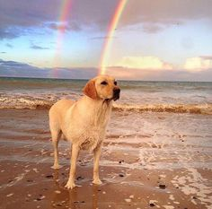 So this is what's at the end of the rainbow! . Thanks @nagoix for sharing! by dogsonadventures