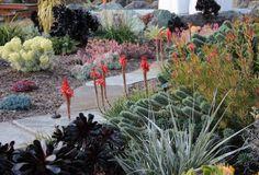 Gardens by Gabriel - San Luis Obispo Landscapes and Design - California Central Coast Ecological Landscaping