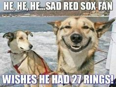 Here we take a look into what dogs would think if they were high. Funny Dog Memes, Funny Dogs, Funny Animals, Dog Humor, What Dogs, Dog Eyes, I Love Dogs, Pugs, Husky