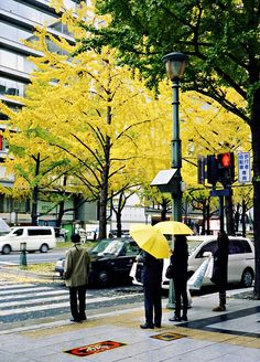 Midosuji, Osaka, Japan 御堂筋