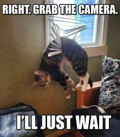 OK, Human Take 400 More Pictures And Then Help Me. I'll Wait  // funny pictures - funny photos - funny images - funny pics - funny quotes - #lol #humor #funnypictures