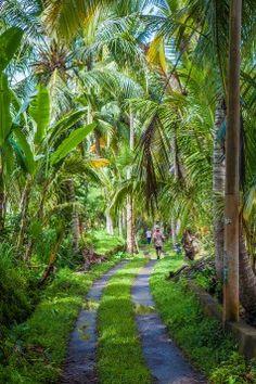 Bali – Leben im Reisfeld