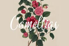 Camellias by Enjoy Production on @creativemarket