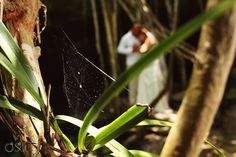 Riviera Maya Cenote Trash the Dress, peeking through a spider web on the lovers in the jungle.  Mexico wedding photographers Del Sol Photography