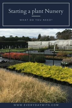 This is a list of things that you will need to be able to start your own plant nursery. We created our wholesale plant nursery… Love Garden, Lawn And Garden, Small Garden Nursery, Wholesale Plant Nursery, Best Business Ideas, Business Goals, Wholesale Plants, Beach Gardens, Carnivorous Plants