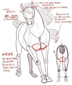 Horse Drawings, Animal Drawings, Art Drawings, Drawing Art, Drawing Techniques, Drawing Tips, Drawing Reference, Horse Drawing Tutorial, Horse Anatomy