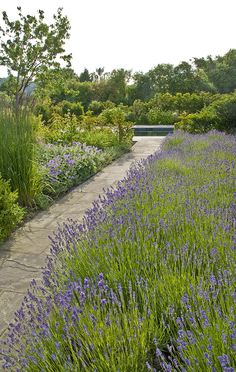 Sinuous lines of box hedging and bold swathes of perennial planting define the garden spaces and unite this contemporary barn conversion with it's rural landscape at the foot of the South Downs in Sussex.