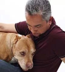 Photo of Cesar for fans of Cesar Millan 15832983 Cesar Millan, Pet Loss Grief, Pitbulls, Pet Health, Mental Health, Nanny Dog, Dog Whisperer, Dog Training Tips, Dogs And Puppies