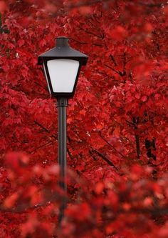 Red red red! #streetlamps, #streetlights, #lights