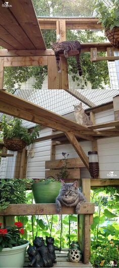 Comment construire un catio pour votre chat - Cat Enclosure - Chat Diy Pour Chien, Outdoor Cat Enclosure, Reptile Enclosure, Cat Garden, Cat Condo, Outdoor Cats, Outdoor Cat House Diy, Outdoor Ideas, Space Cat
