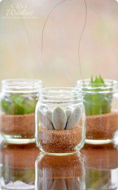 Mini Succulent Hangi