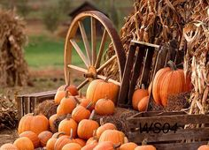 It's time to whip up all those pumpkin treats you've been longing for all summer long! Ahhhh…pumpkin season has arrived! This is my favorite season to bake. Pumpkin anything and e… Harvest Time, Fall Harvest, Harvest Party, Harvest Season, Fond Studio Photo, Autumn Scenes, Fall Wallpaper, Pumpkin Wallpaper, Wallpaper Ideas