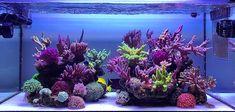 Acrylic Aquarium, Reef Aquarium, Saltwater Aquarium, You Are The Greatest, Nano Tank, Cool Tanks, Salt And Water, Corals, Aquariums