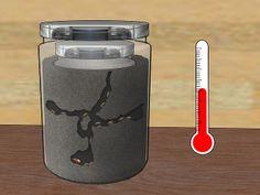 Build an Ant Farm Step