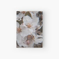 White Springs, Spring Blossom, Paper, Prints, Pictures, Photography, Painting, Design, Art