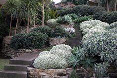 running down a slope, mix of shades of greens, textures, shapes, stone walls, cement steps, by Spirit Level Designs