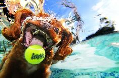 Underwater shot of a dog going after his/her ball - I never thought about what it looks like before but I'm glad I can now see it LOL :)