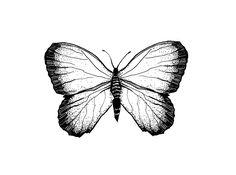 #line #graphic #minimal #minimalism #graphics #nothingisordinary_ #bw #bnw #lines #rsa_bnw #rsa_ #rsa_minimal #contemporary #artcontemporain #paint #draw #texture #sketch illustration artist art graphicdesign #design #illustrator #sketching #drawing #doteart  #rusgraphics  #artoftheday #графика #иллюстрация #рисую #художник #дизайн #design #illustrator #чб #blacknwhite_perfection #contemporary #чбрисунок #blacknwhite #blackandwhite #digital #butterfly #butterflies #insects