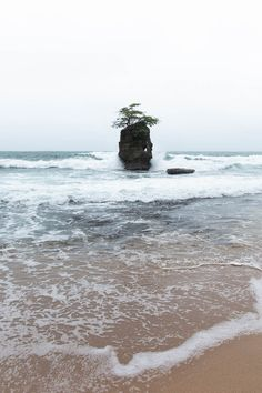 The national Parks around Puerto Viejo Cahuita, Pacific Coast, Main Street, Panama, Costa, Caribbean, National Parks, Tours