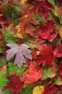 Autumn Leaves Wallpaper, Fall Wallpaper, Flower Wallpaper, Samhain, Mabon, Beautiful Nature Wallpaper, Beautiful Landscapes, Flower Backgrounds, Wallpaper Backgrounds