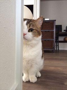 今回はリクエストにお応えしまして「カメラ目線」のにゃんこ画像を集めました! 猫たちのかわいいキメ顔や...
