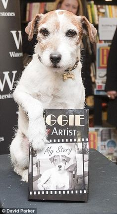 Uggie was calm, smart, unafraid and good at taking orders