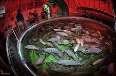 Best Aquaculture Practices (BAP) standards set by the Global Aquaculture Alliance. Epcot Hydroponics and Aquaculture Farm, Florida.     Aqauponics and  aquaculture