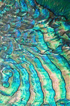 themagicfarawayttree:    Abalone shell