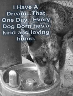 Wish we could save them all....take care of your pets and get them spayed or neutered